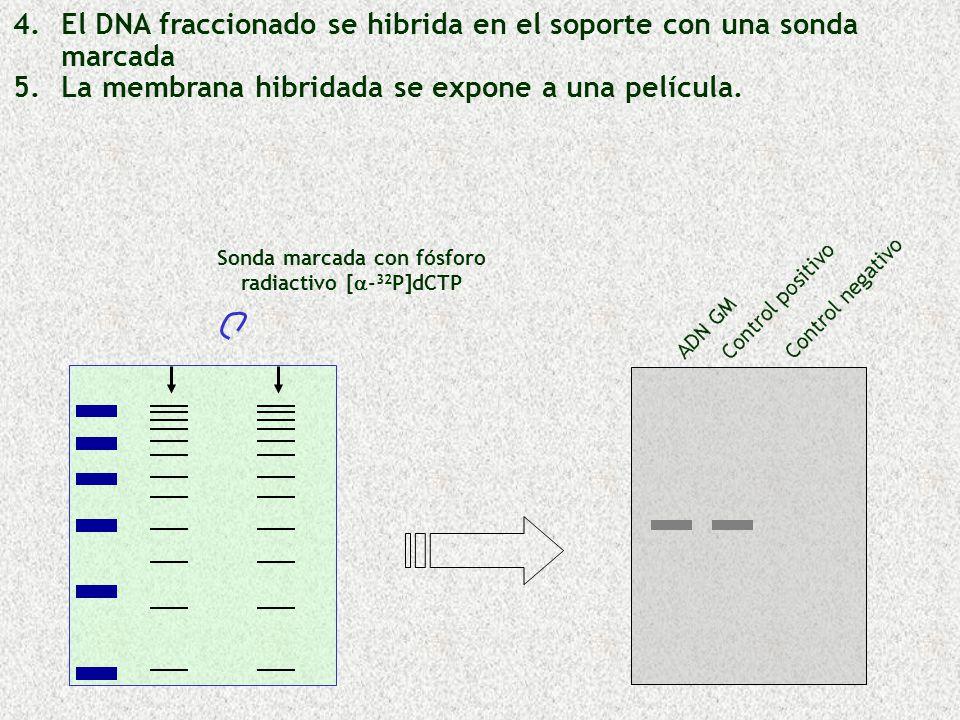 Sonda marcada con fósforo radiactivo [a-32P]dCTP